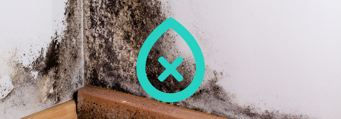 Condensation Damp | I Need damp proofing